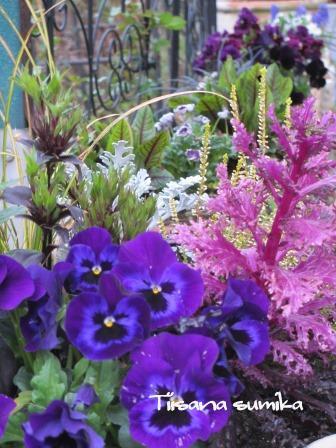 玄関前のお花たちに迎えられ和んでいます♪_a0243064_0375129.jpg