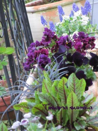 玄関前のお花たちに迎えられ和んでいます♪_a0243064_038103.jpg