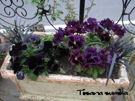 玄関前のお花たちに迎えられ和んでいます♪_a0243064_0383733.jpg