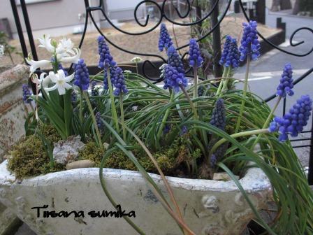 玄関前のお花たちに迎えられ和んでいます♪_a0243064_0385823.jpg