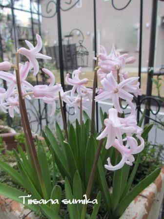 玄関前のお花たちに迎えられ和んでいます♪_a0243064_0392711.jpg