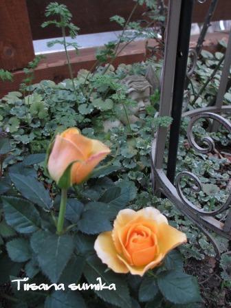 玄関前のお花たちに迎えられ和んでいます♪_a0243064_0523974.jpg