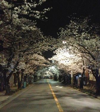 次は葉桜を_c0130172_17362485.jpg