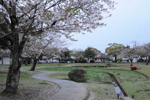 文化公園 桜 宮崎市 13年3月_a0043276_4341747.jpg