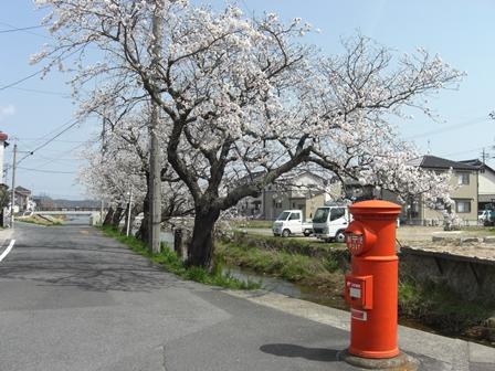 桜満開_b0231886_20385773.jpg