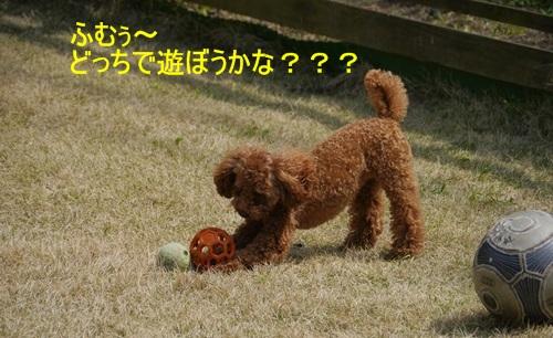 スーパー♪♪さくら♪♪の一日\(^ ^)/_b0175688_23522531.jpg