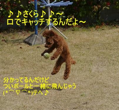 スーパー♪♪さくら♪♪の一日\(^ ^)/_b0175688_23563772.jpg