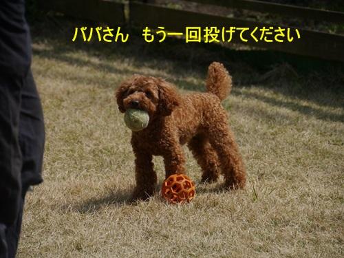 スーパー♪♪さくら♪♪の一日\(^ ^)/_b0175688_23572279.jpg