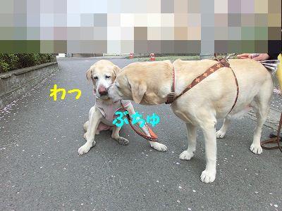 e0222588_1643290.jpg