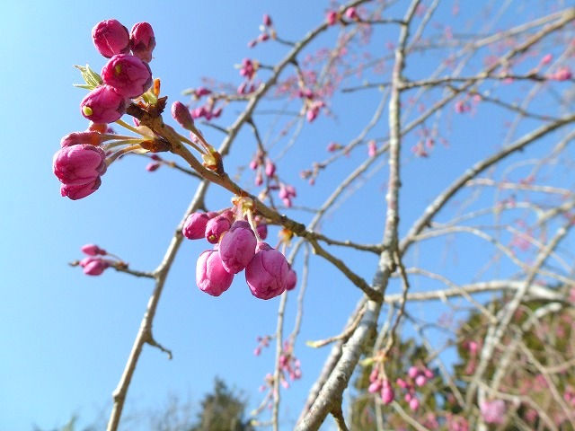 春ーー♫_c0165589_1793153.jpg