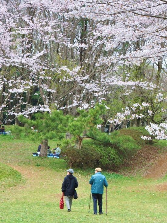桜はらはら_a0126590_16531679.jpg