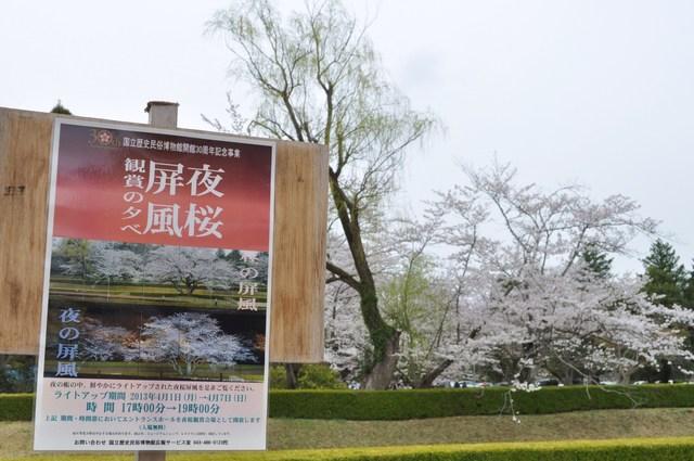 桜はらはら_a0126590_1723481.jpg