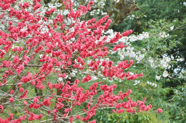 桜はらはら_a0126590_17292469.jpg