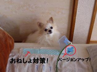 c0160092_17265581.jpg