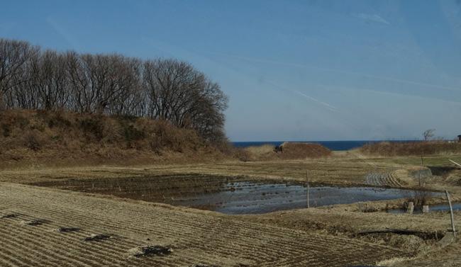 春風に誘われて西海岸ドライブ2013_a0136293_17162872.jpg