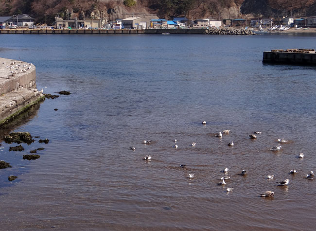 春風に誘われて西海岸ドライブ2013_a0136293_17323626.jpg