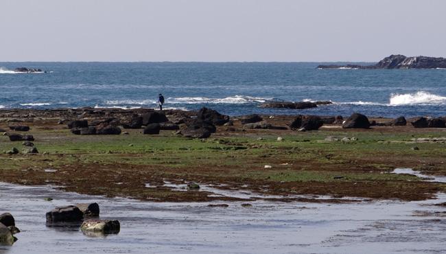 春風に誘われて西海岸ドライブ2013_a0136293_18384981.jpg