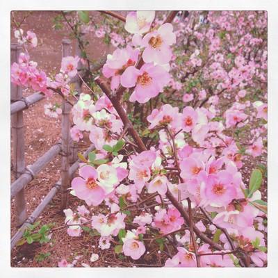 散る桜 残る桜も 散る桜_f0182998_23383383.jpg