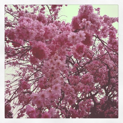 散る桜 残る桜も 散る桜_f0182998_23384973.jpg