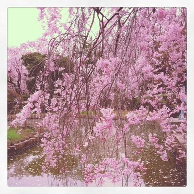散る桜 残る桜も 散る桜_f0182998_2339559.jpg