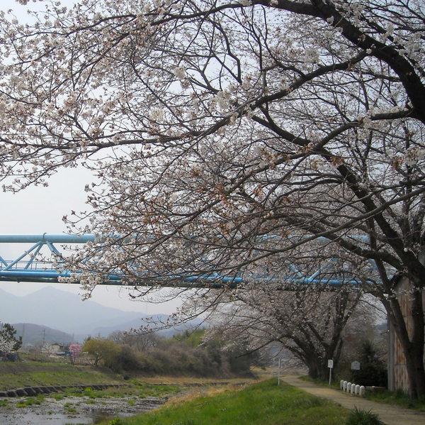 川桜、桜風_c0141013_2003096.jpg