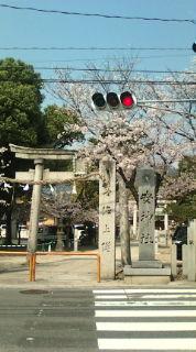 【桜満開の安神社に参拝】_e0094315_1193583.jpg