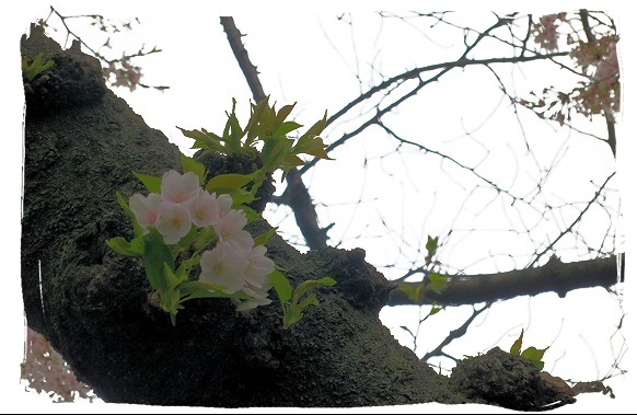 f0111425_1841386.jpg