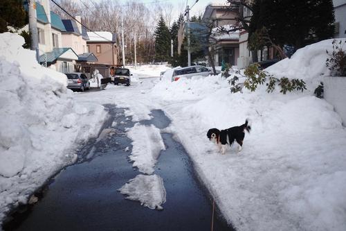 この期に及んでも、雪は降る。_c0051132_2151826.jpg