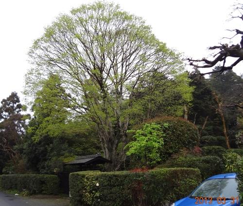 アルミ付きとアルミなし紙パックのリサイクル(野川の枝垂れ桜と新緑、容リ法、LL紙パック、混合回収)_e0223735_18242262.jpg