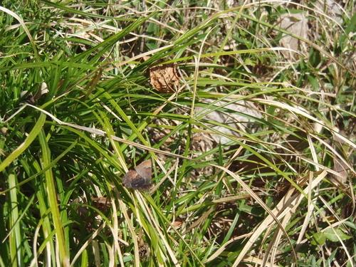 コツバメ 北山湿地3月30日 飛翔編_d0254540_8311156.jpg