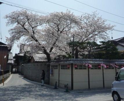 北野をどり・ハンバーグランチ・桜の歌舞練場へ。_f0181251_15452591.jpg