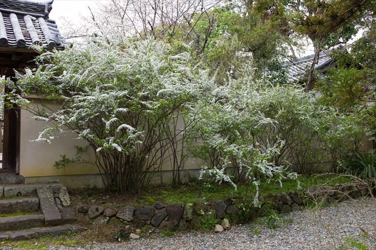 奈良旅行 その4 海龍王寺_e0170058_18191922.jpg