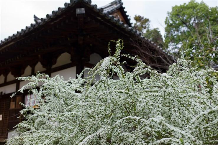 奈良旅行 その4 海龍王寺_e0170058_1819374.jpg