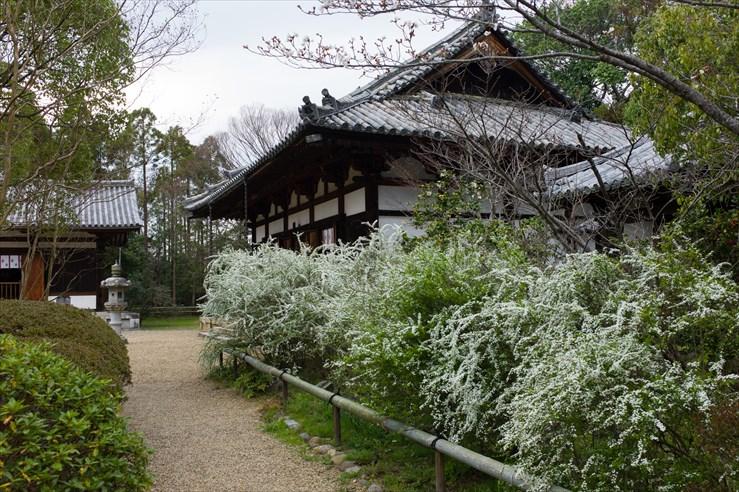 奈良旅行 その4 海龍王寺_e0170058_18194413.jpg