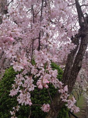お花見!_c0131063_2356678.jpg