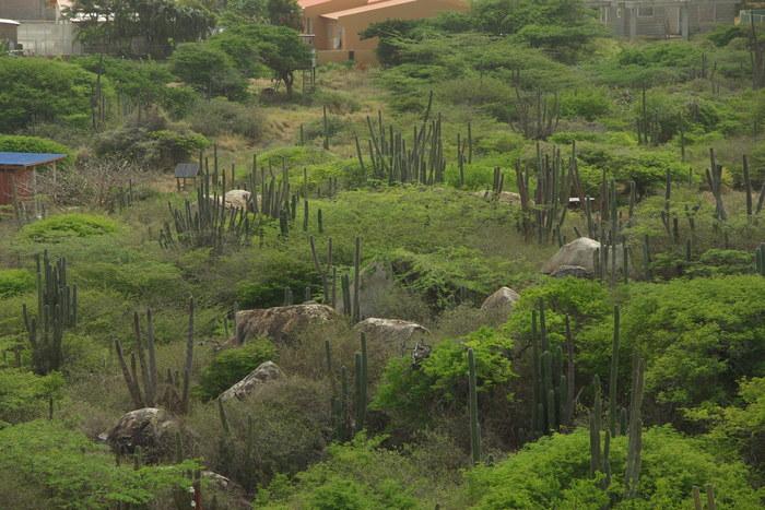 オランダ領アンティール諸島アルーバ-2奇岩群&チャペル  Antilles Aruba-2 Chapel & Rock Formations_e0140365_115373.jpg