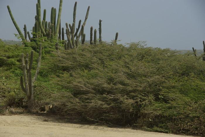 オランダ領アンティール諸島アルーバ-4 つけたし!  Antilles Aruba-4 Additional Pieces about Aruba _e0140365_2311147.jpg