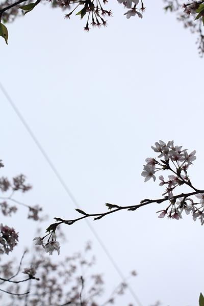 2013年3月 課題写真 「今日見た空は」_f0168968_21322486.jpg