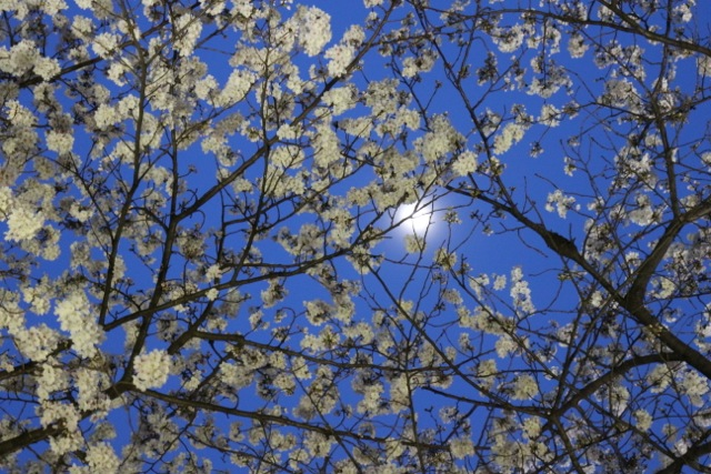 2013年3月 課題写真 「今日見た空は」_f0168968_2255636.jpg