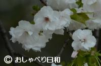 e0104869_22532777.jpg