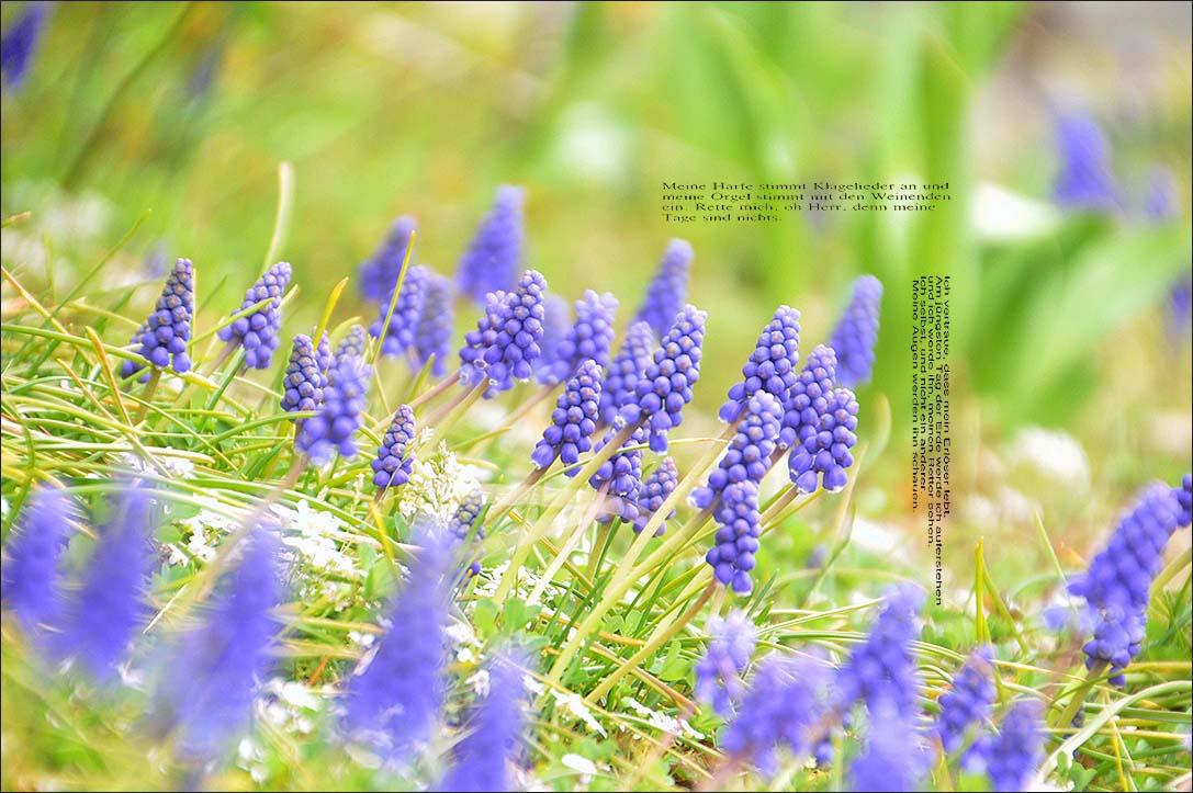 f0198771_093732.jpg