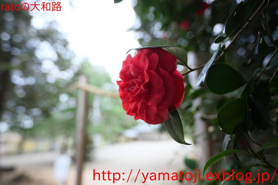 f0236776_18504486.jpg