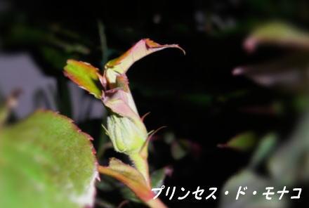 d0178877_2010162.jpg