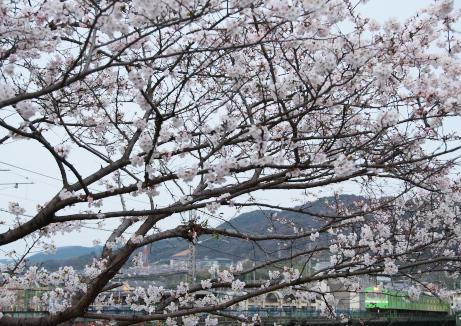 宇治川を渡るJR_f0266284_172938.jpg