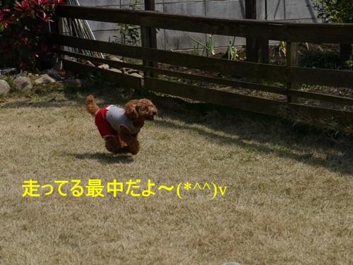 スーパー♪♪さくら♪♪の一日\(^ ^)/_b0175688_034192.jpg