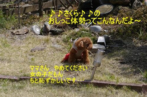 スーパー♪♪さくら♪♪の一日\(^ ^)/_b0175688_12144410.jpg