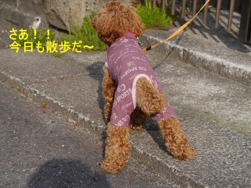 毎日の散歩は、お友達ワンちゃんたちと_b0175688_22472349.jpg