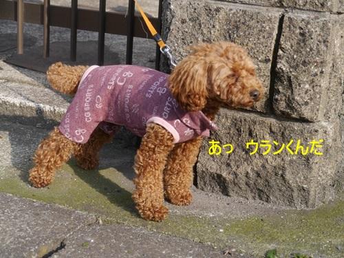 毎日の散歩は、お友達ワンちゃんたちと_b0175688_22473468.jpg
