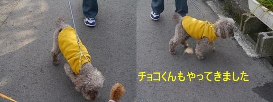 毎日の散歩は、お友達ワンちゃんたちと_b0175688_22475859.jpg