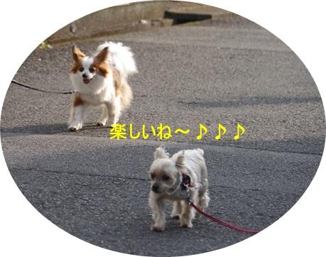 毎日の散歩は、お友達ワンちゃんたちと_b0175688_22505148.jpg